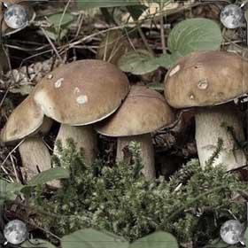 Искать грибы