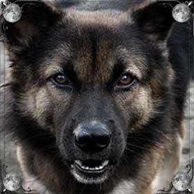 Испугаться собаку