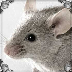 Живая мышь