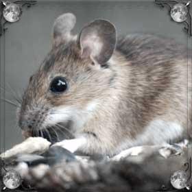 Кормить мышь