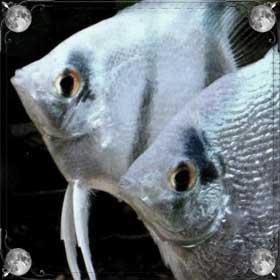 Кормить рыбок