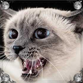 Кошка царапает