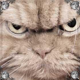Кошка смотрит