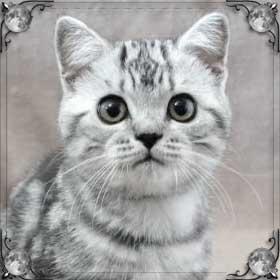 Кошка вернулась