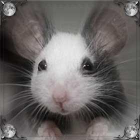 Красивая мышь