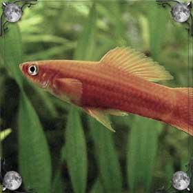 Рыбка в руках