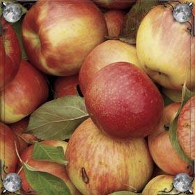 Красно-зеленые яблоки