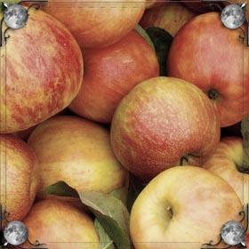 Красть яблоки