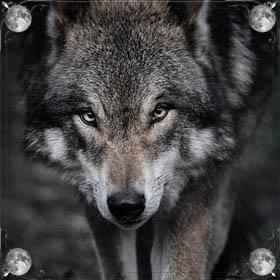 Кровь волка