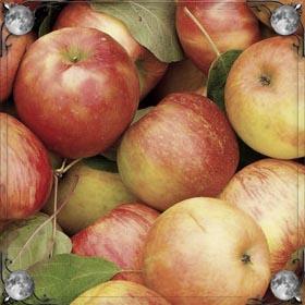 Крупные яблоки