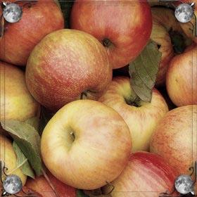 Куча яблок