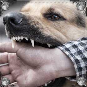 Кусала большая собака