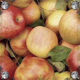 Кусать яблоко