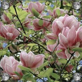 Кусты цветов