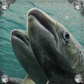 Ловить лосося