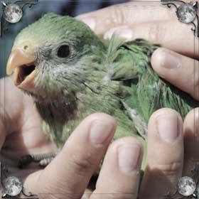 Ловить попугая