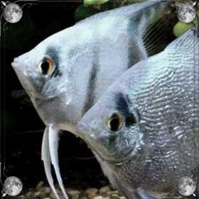 Ловить рыбок