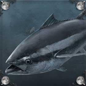 Ловить тунца