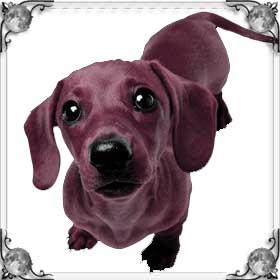 Малиновая собака