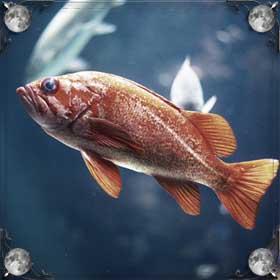 Мальки рыб