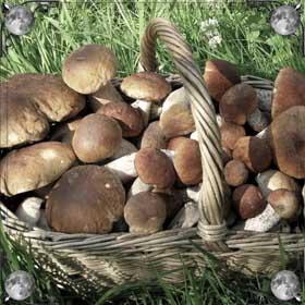 Мариновать грибы