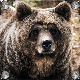 Медведь ест