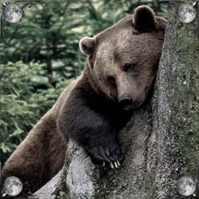 Медведь кусает