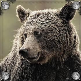 Медведь плавает