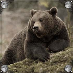 Медведь спас