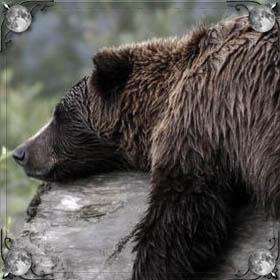 Медведь спит