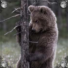 Медведи в лесу