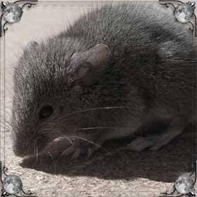 Мышь убегает