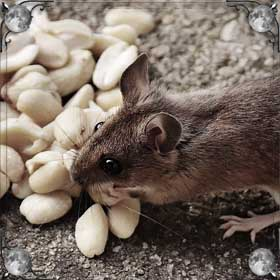 Мыши едят