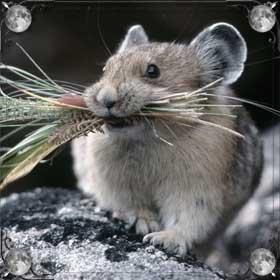 Мыши и хомяки