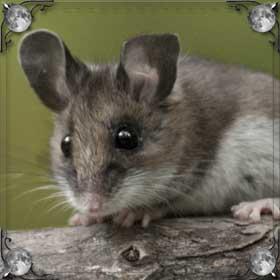 Мыши и кровь