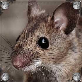 Мыши и тараканы