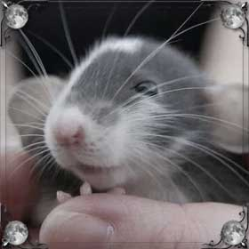 Мыши кусают руки