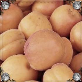 Много абрикос