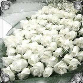Много белых цветов