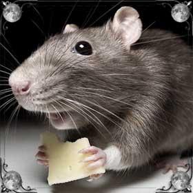 Много дохлых мышей