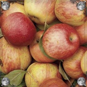 Много яблок на земле