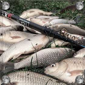 Много крупной рыбы