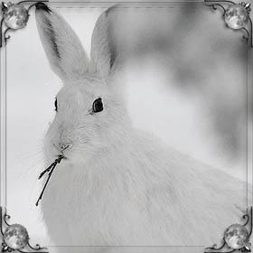 Много зайцев