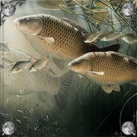 Много живой рыбы