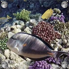 Море и много рыбы