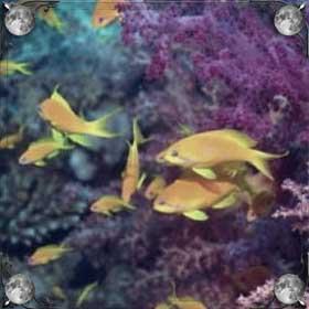 Море и рыбки