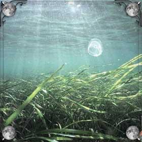 Море и водоросли