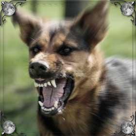 Набросилась собака