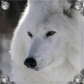 Нападение волка