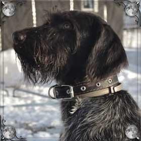 Напала черная собака